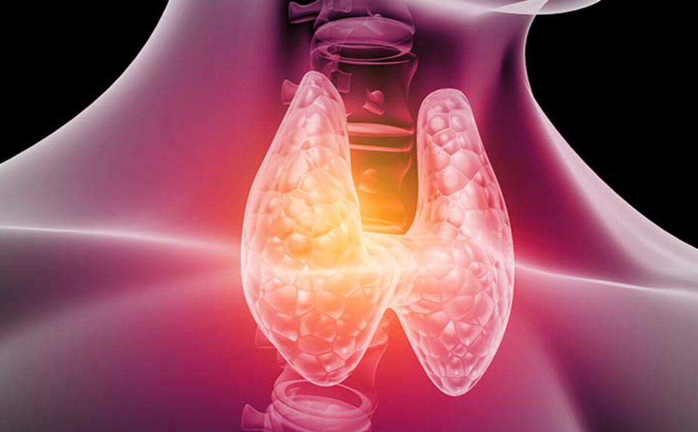 Human,Thyroid,Anatomy.,3d,Illustration